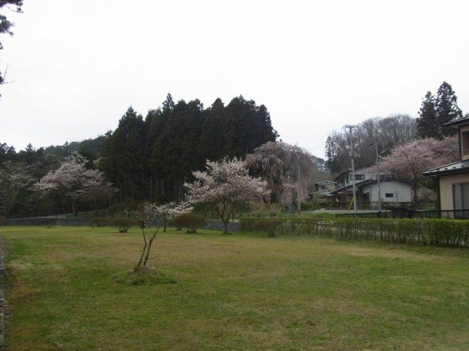 春の平泉桜と緑が織り成す里山の風景