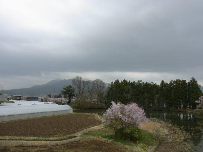 平泉春の訪れ
