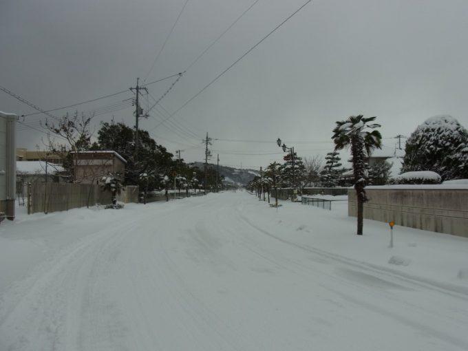 日本のハワイ雪に凍える厳寒のシュロの木