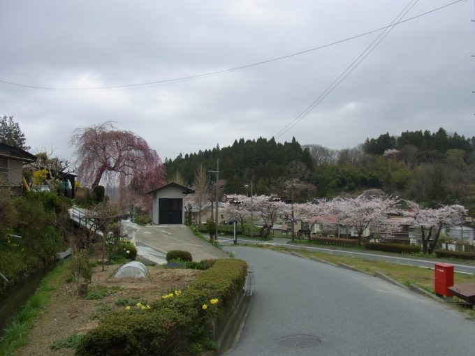 桜咲く春の平泉