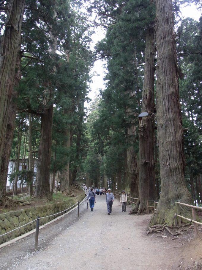 平泉中尊寺月見坂荘厳な杉並木