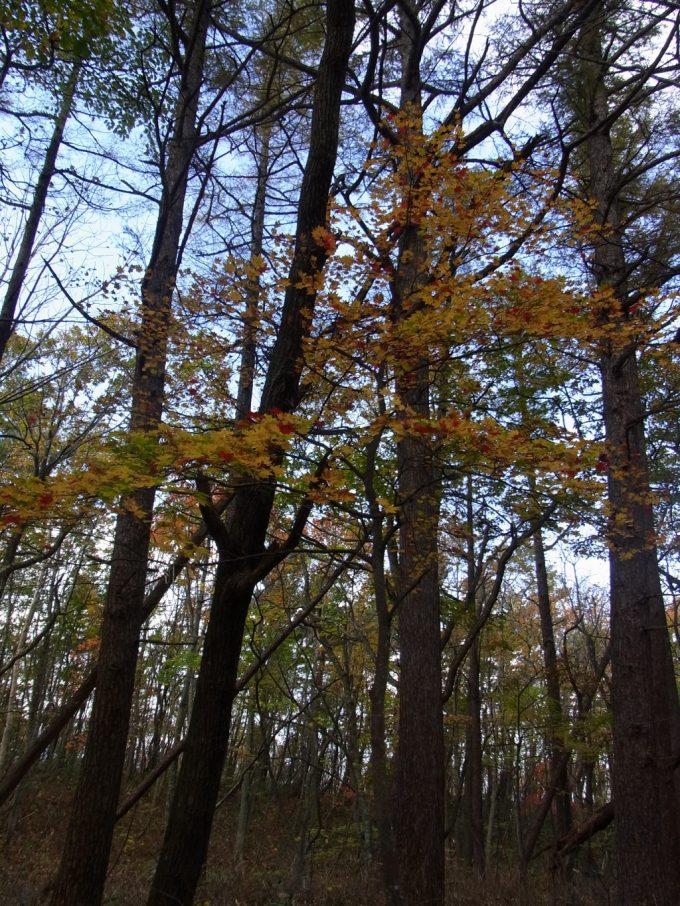 色づく秋の紅葉