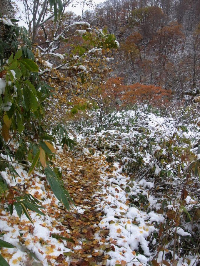 薄い雪化粧と紅葉