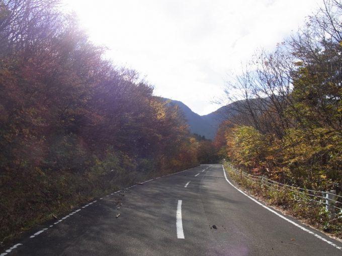 秋の日に照らされ輝く紅葉