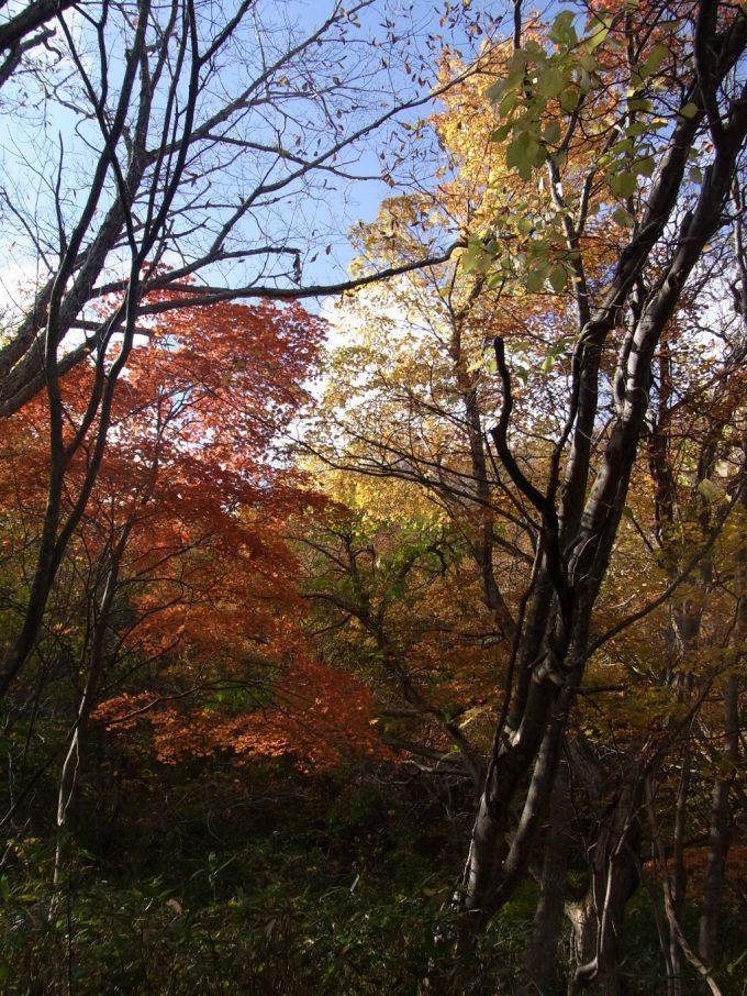 青空と紅葉の競演