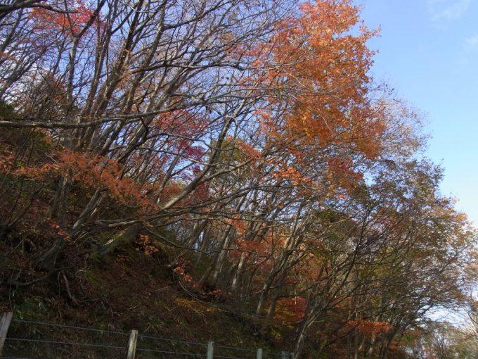 秋空に映える紅葉