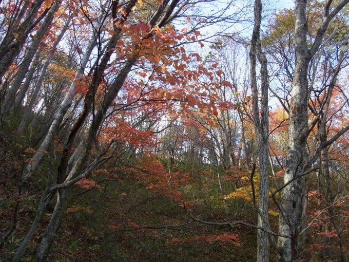 色づく木々秋の空