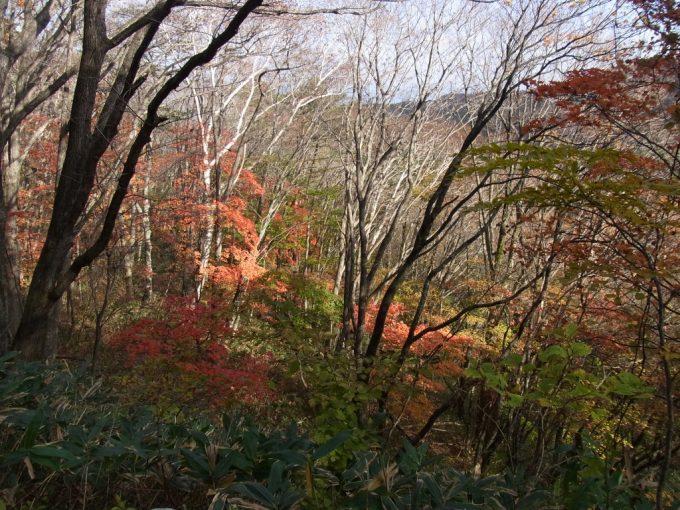 色とりどりに色づく木々