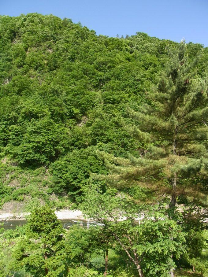 札幌小金湯温泉まつの湯客室からの爽快な初夏の緑