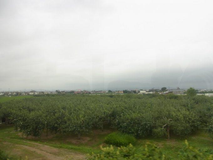 リゾートしらかみ車窓に広がる青い実を付けたりんごの木