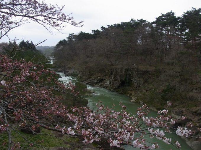 三分咲きの桜と厳美渓