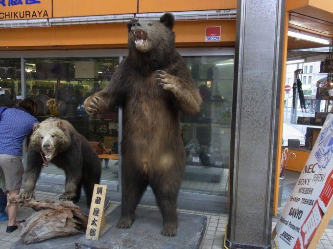 札幌狸小路に出没したヒグマ