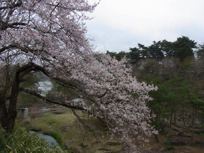 桜越しに眺める厳美渓
