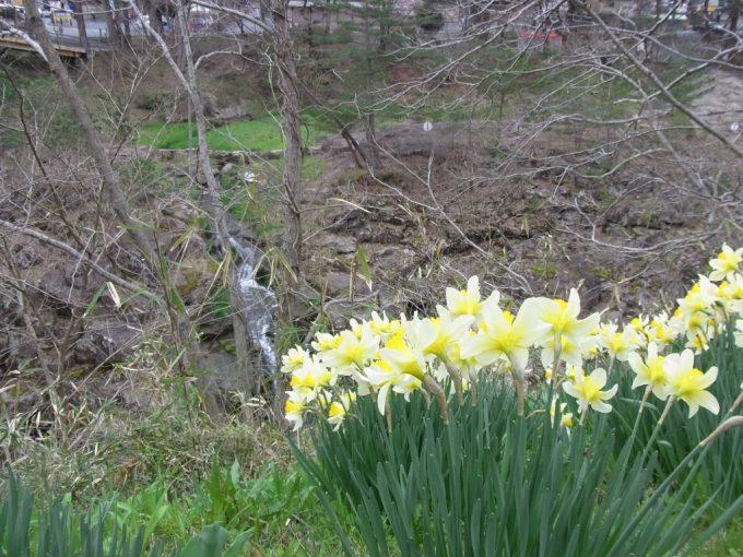 天然記念物厳美渓水仙と小さな滝