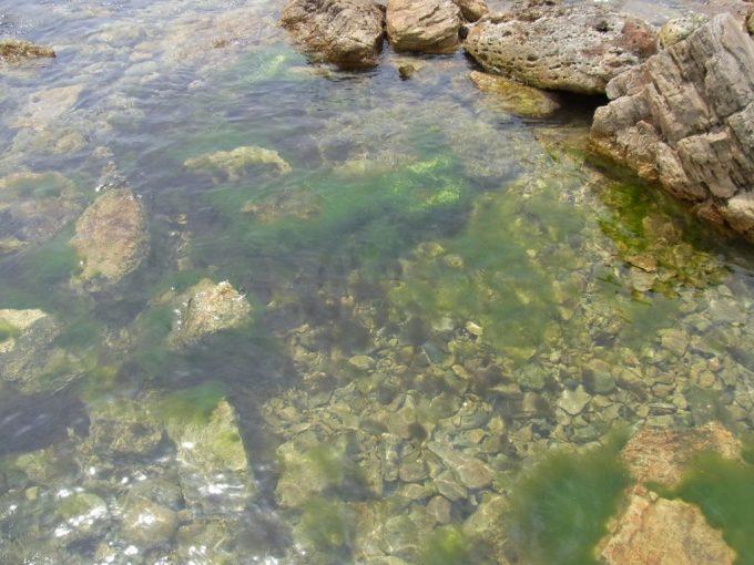 青森深浦きれいな海と岩場の海藻