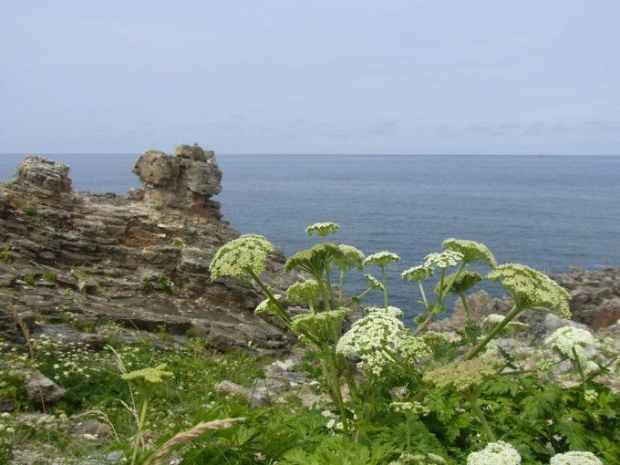 青森深浦大岩から夏の日本海水平線を眺める