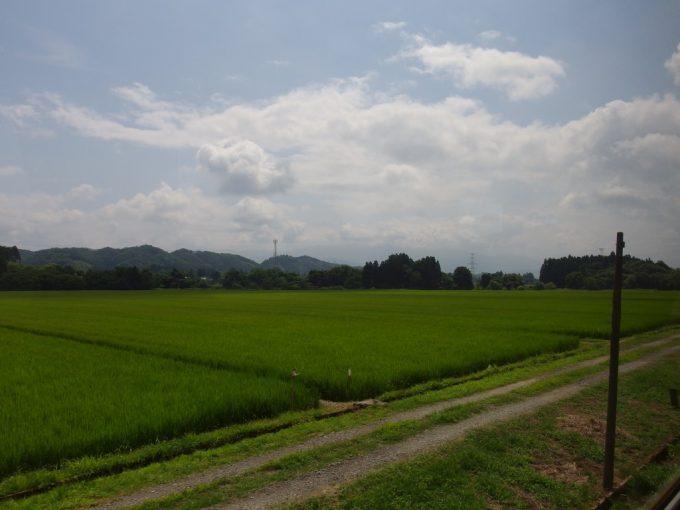秋田内陸線車窓から眺める夏真っ盛りの田んぼ
