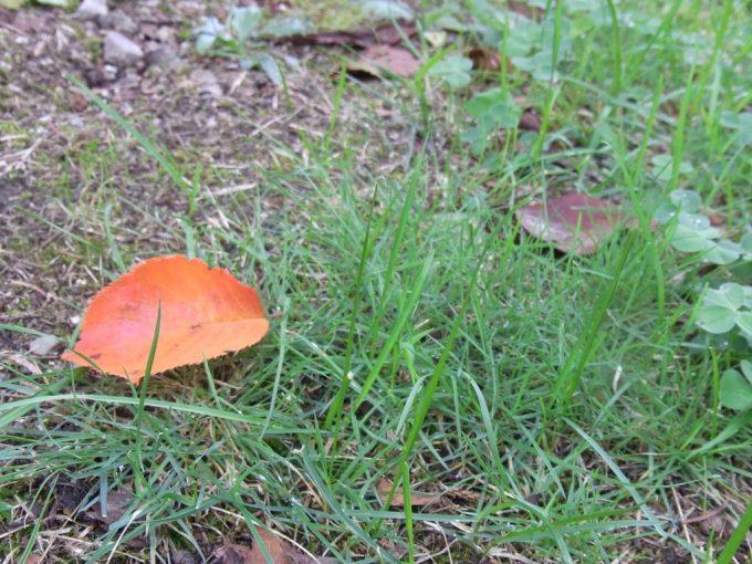 岩手公園秋の風情