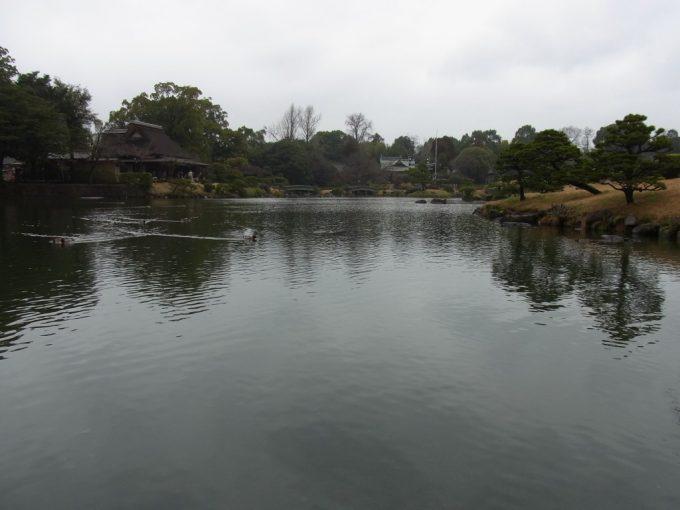 熊本水前寺公園穏やかな水面を泳ぐ水鳥
