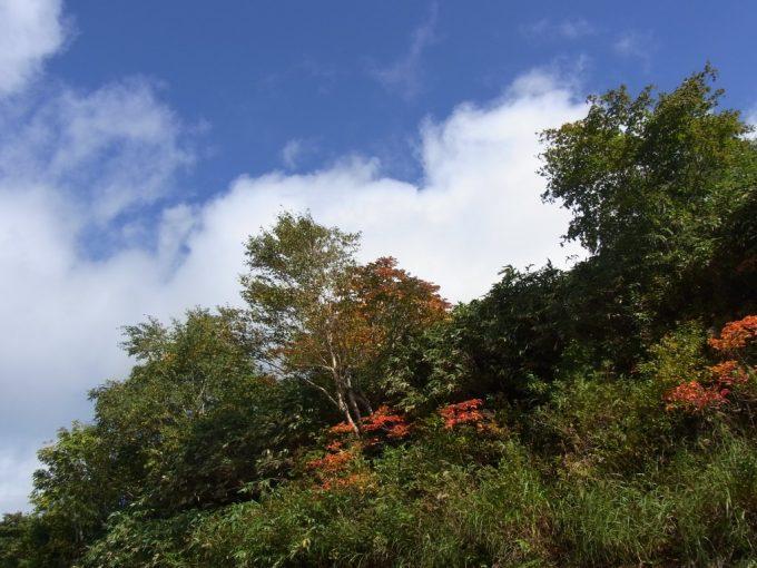 秋の空と色づく木
