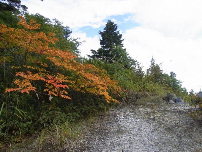 秋の後生掛荒涼とした地獄に彩りを添える紅葉