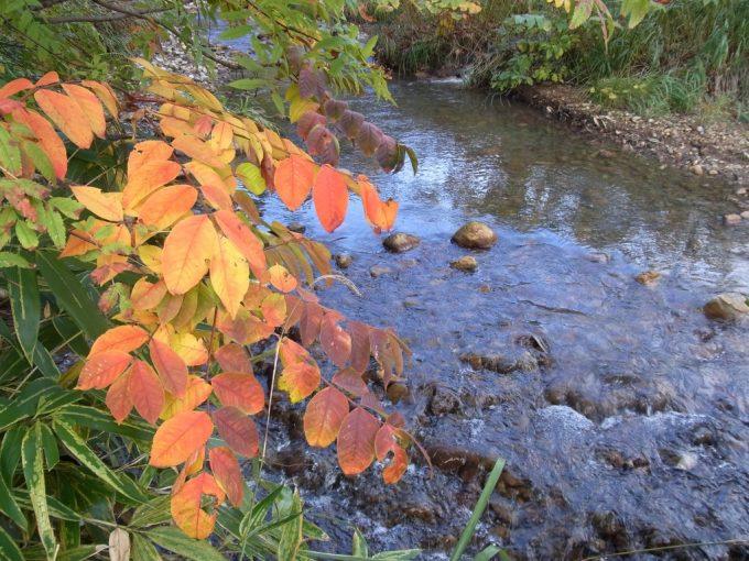 川の流れと鮮やかな紅葉