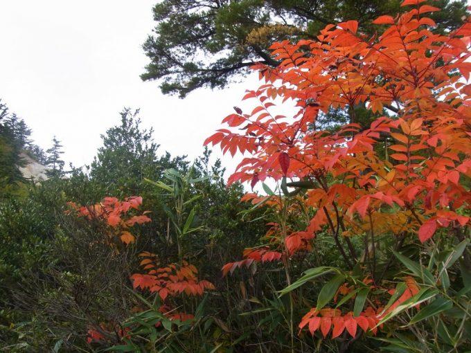 秋の後生掛自然研究路燃えるような紅葉