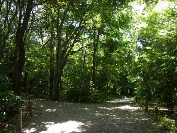 緑豊かな金沢城本丸園地