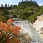 秋の後生掛自然研究路を彩る紅葉