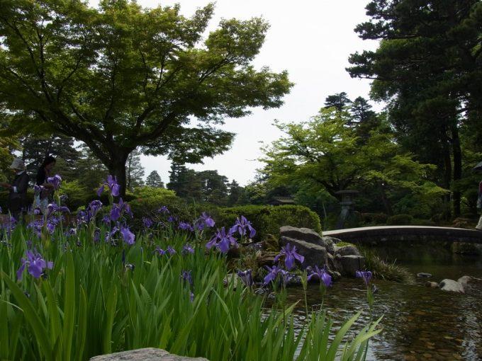 金沢兼六園ことじ灯篭とカキツバタ