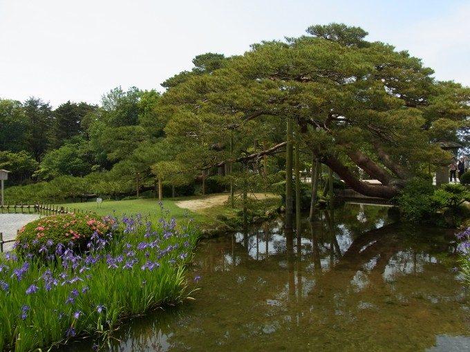 初夏の金沢兼六園