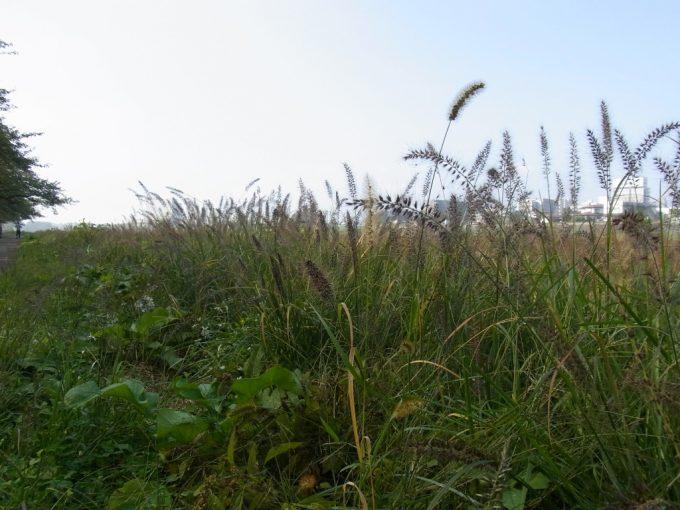 北上川河畔を彩る秋の風情