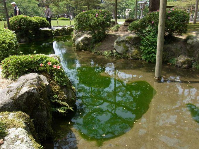 金沢兼六園清らかな水と藻