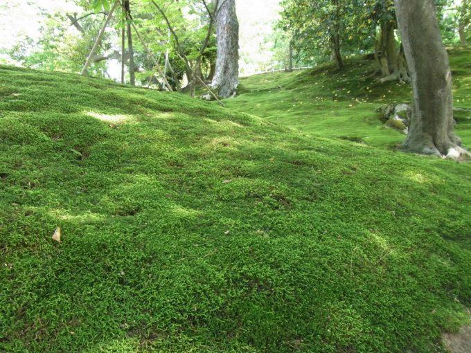 初夏の金沢兼六園山崎山を覆う苔