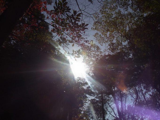木々を照らす秋の日差し