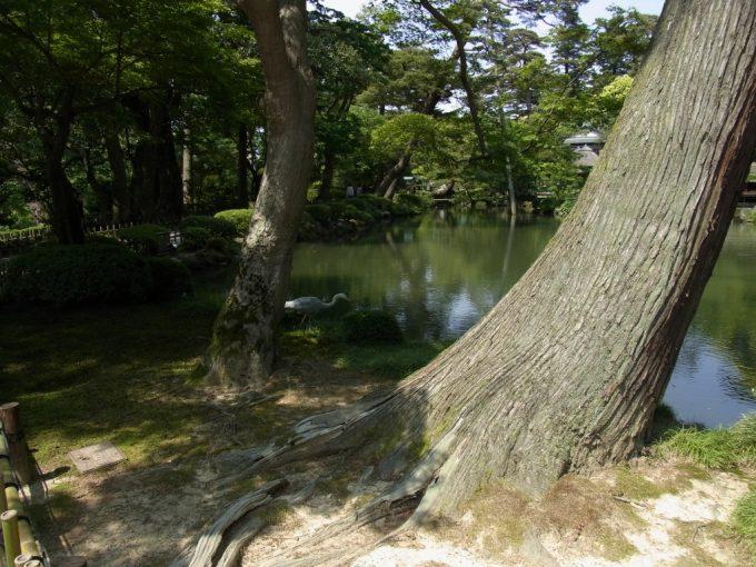 金沢兼六園魚を狙う鷺