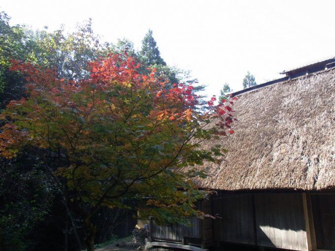 北上みちのく民俗村茅葺屋根と鮮やかな紅葉