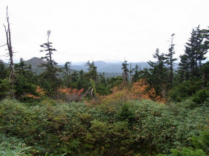 秋の八幡平アオモリトドマツと紅葉