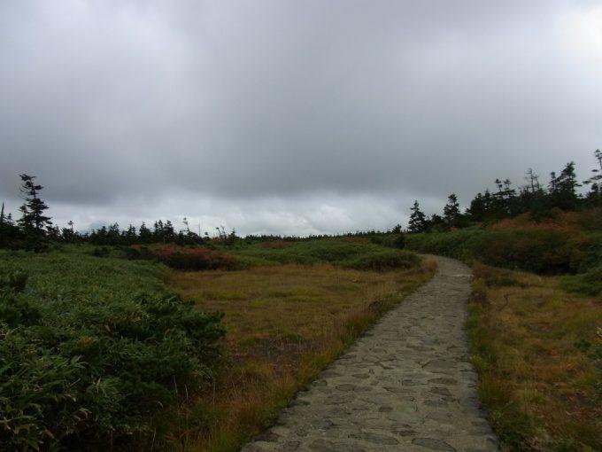 秋の八幡平頂上アオモリトドマツは減り草と笹に覆われる