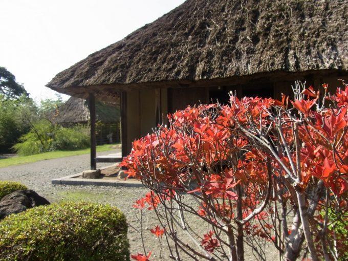 北上みちのく民俗村南部曲り屋を彩る色付く木々