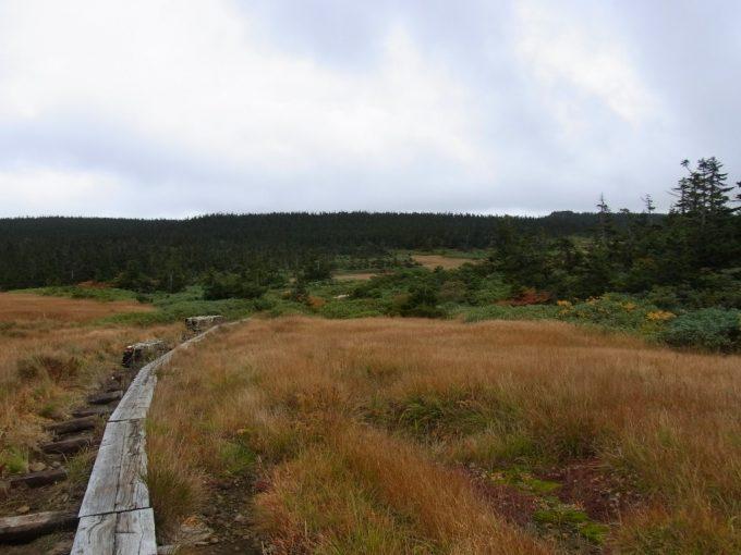 秋の八幡平草紅葉とアオモリトドマツの黒い森
