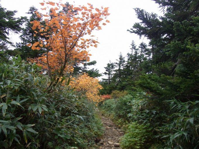 秋の八幡平散策