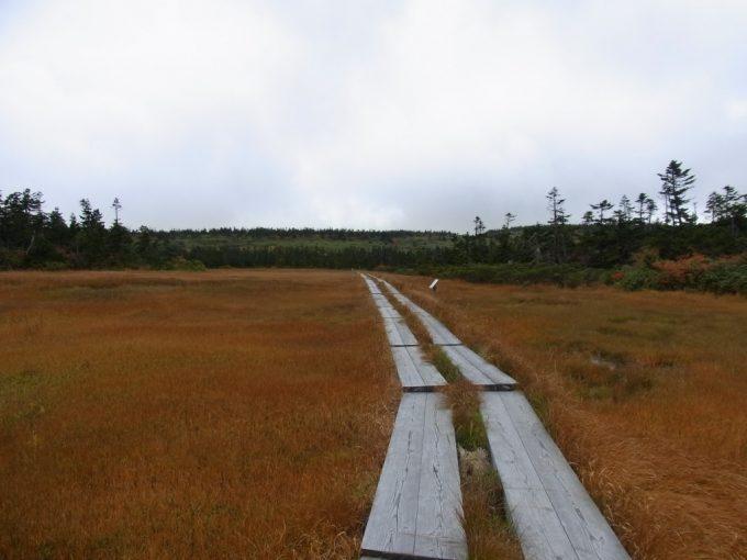 秋の八幡平草紅葉の中をのびる木道