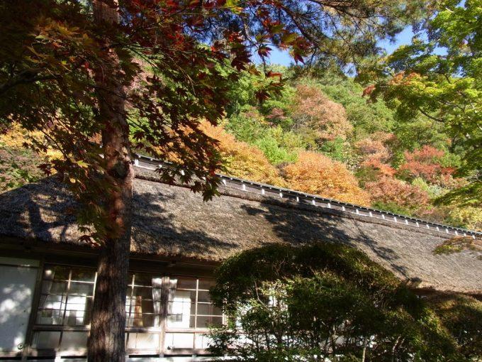 輝く紅葉に彩られる大沢温泉菊水館茅葺屋根