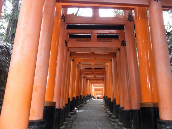 冬の京都伏見稲荷大社どこまでも続く鳥居