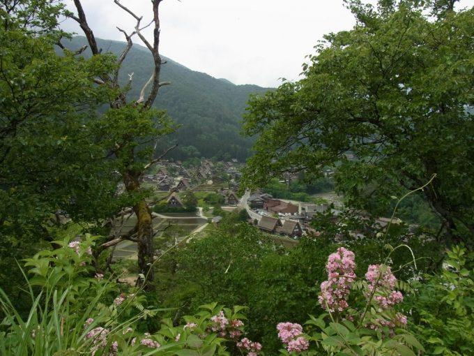 新緑と花越しに見る白川郷合掌造り集落