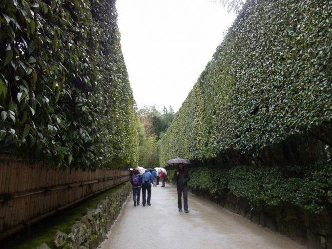 冬の京都雨の銀閣寺立派な生垣