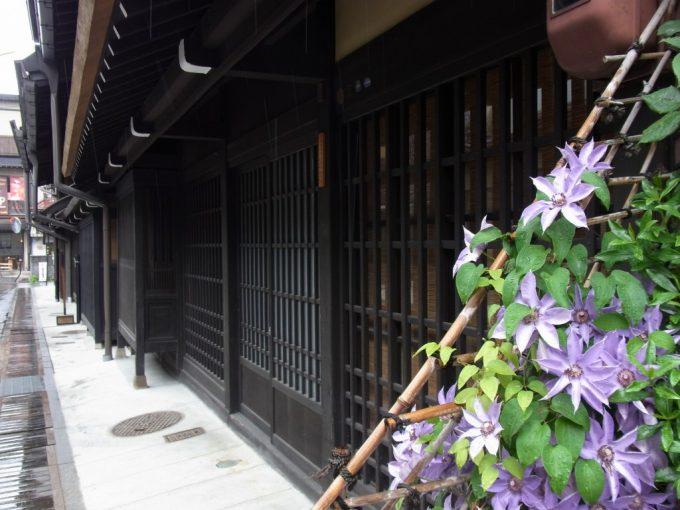 飛騨高山雨に濡れる紫の花と出格子
