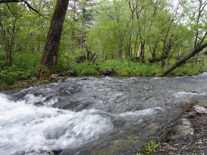 雨の上高地清冽な水が流れる清水川