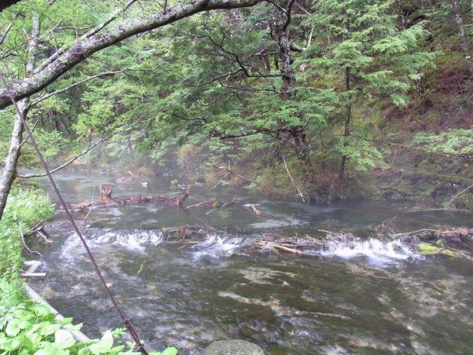 初夏の上高地清水川の清らかな流れ